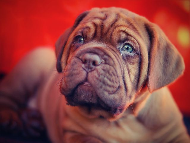 Quel jouet plaira le plus à un chien de grande taille?